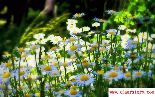 关于春天的谚语常见的