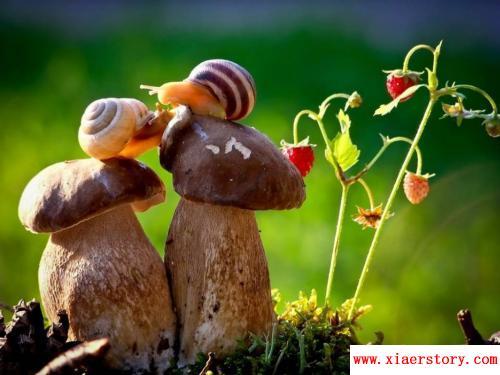 长篇励志故事:向往空中花园的蜗牛